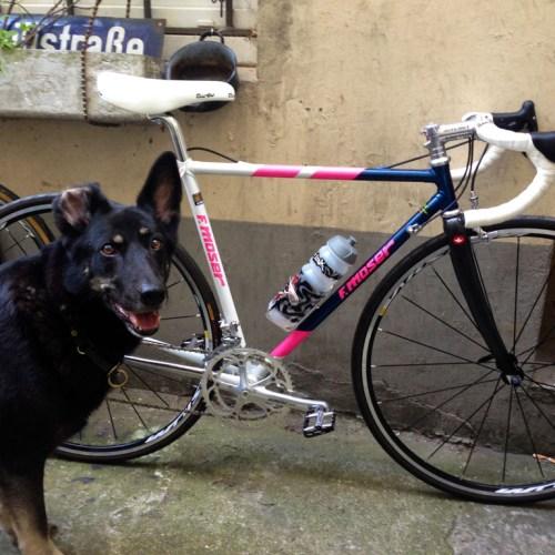Foto Hund Fahrrad
