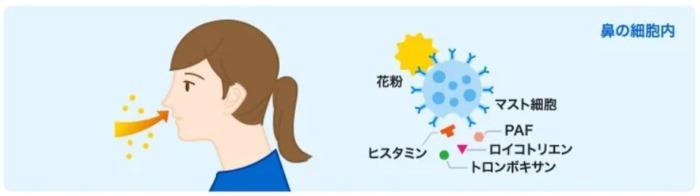 花粉症の仕組み