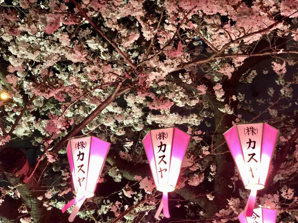 Cherry blossom lanterns along the Sumida River