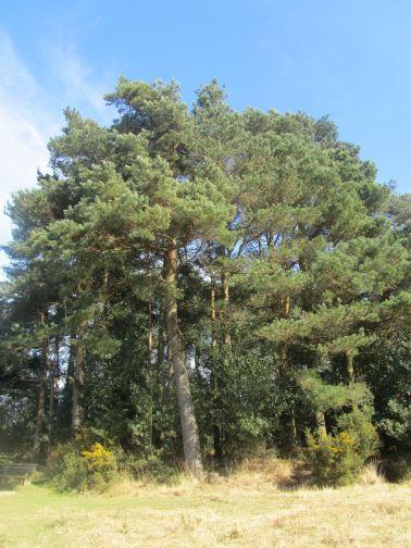 winnie the pooh, ashdown forest