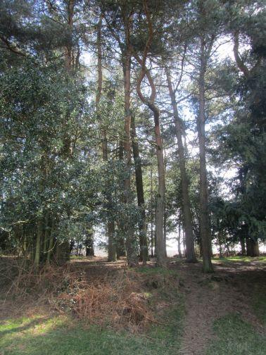 gill's lap, ashdown forest