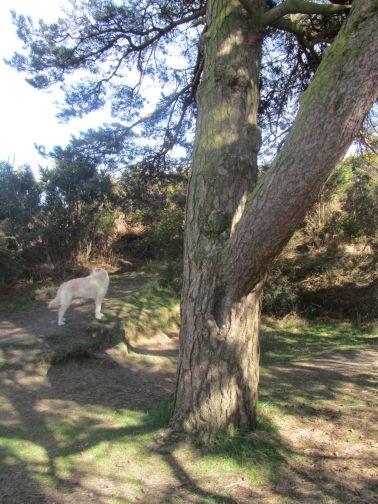 winnie the pooh, ashdown forest, heffalump trap