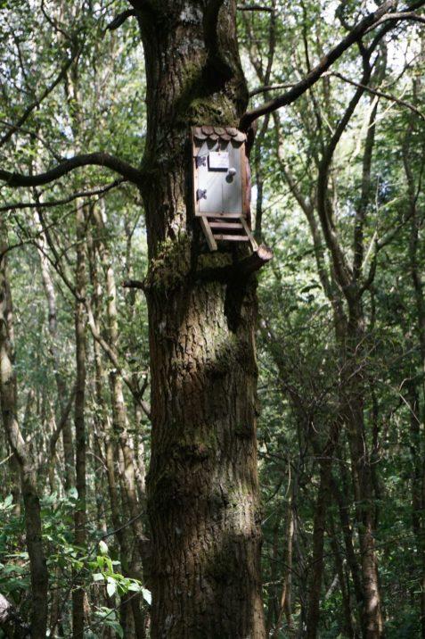 owl's house ashdown forest