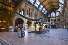 © Natural History Museum