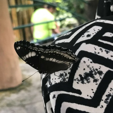 Suitcase Six malaysia-butterfly Three Weeks in Southeast Asia: Our Itinerary