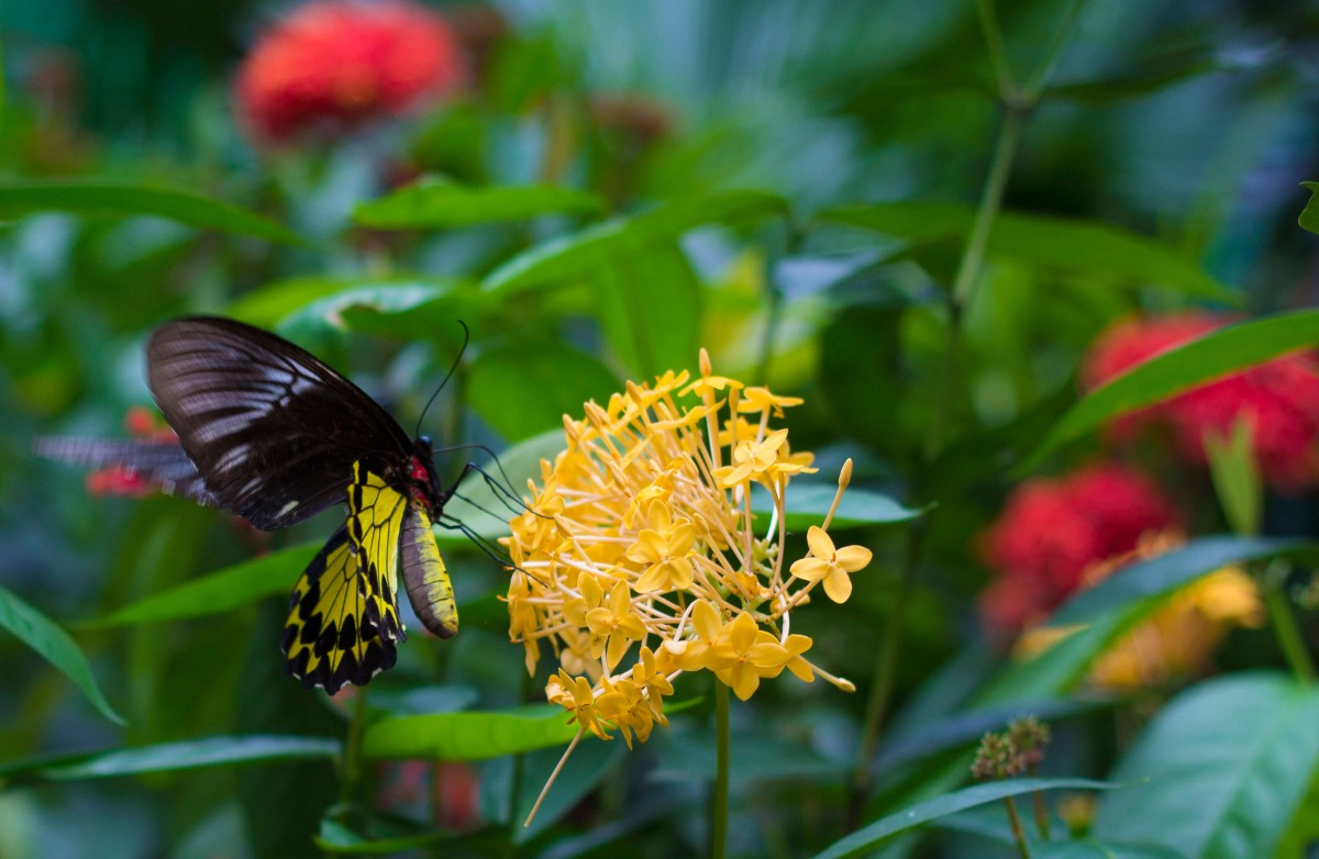 a butterfly at the butterfly gardens