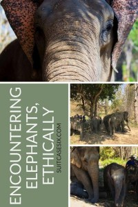 Suitcase Six encountering-elephants-pin-1-200x300 Encountering Elephants Ethically.