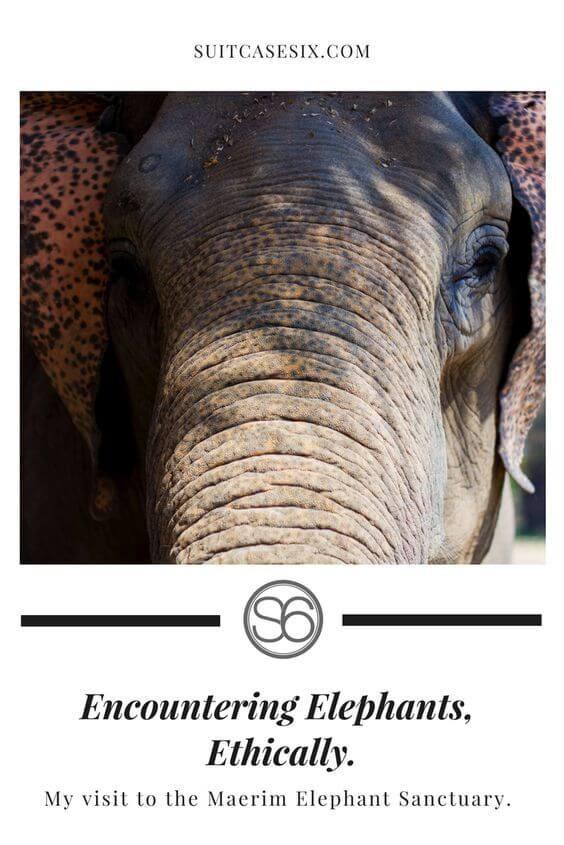 Suitcase Six encountering-elephants-pin-2 Encountering Elephants Ethically.