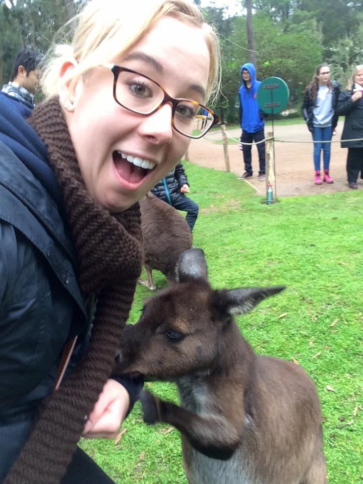 Feeding Kangaroos in Australia.