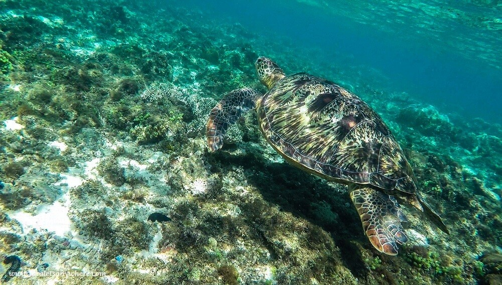 Suitcase Six sea-turtle-in-apo-island3-2 8 Environmentally Friendly Adventures to Discover Around the World