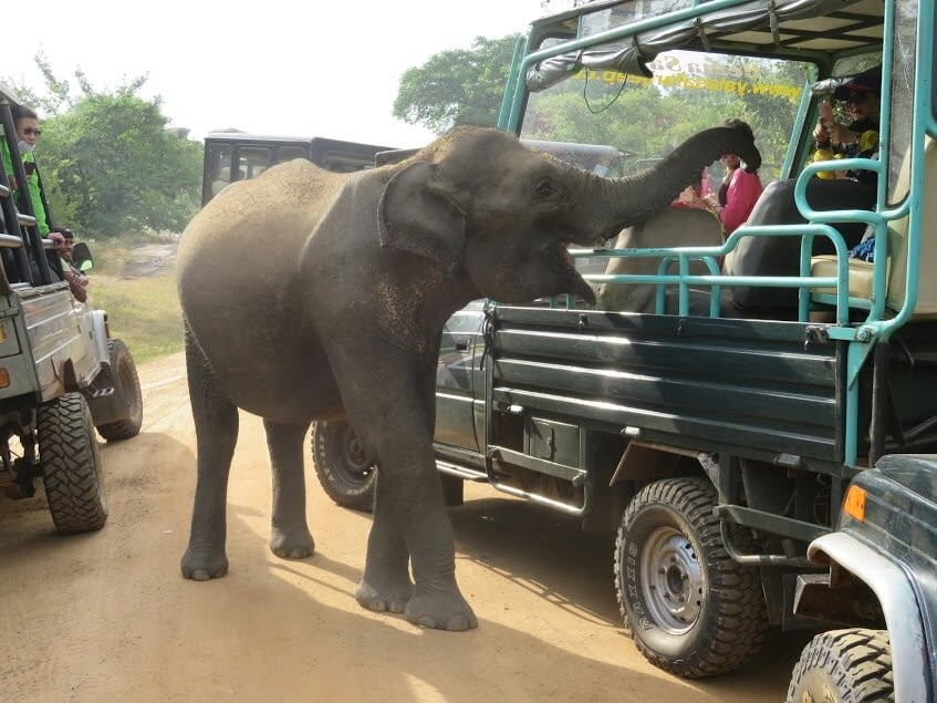 Suitcase Six Animal-Safari Ethical Travel Mistakes: 5 Things We Wouldn't Do Again and Their Responsible Alternatives