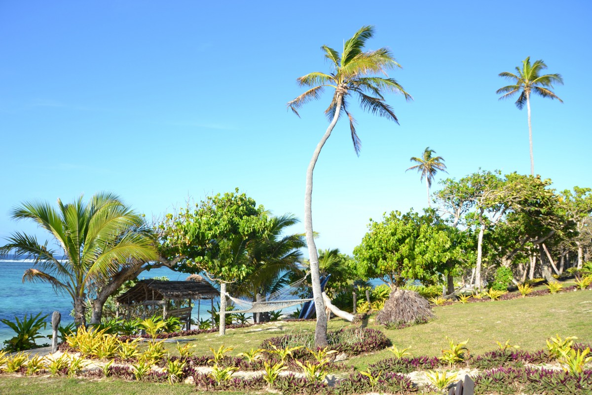 A tall palm tree sways, towering over other green tress on a coast.