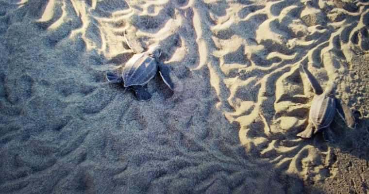 Suitcase Six Baby-Sea-Turtles Woman of the Week: Interview with an AVID Instructor