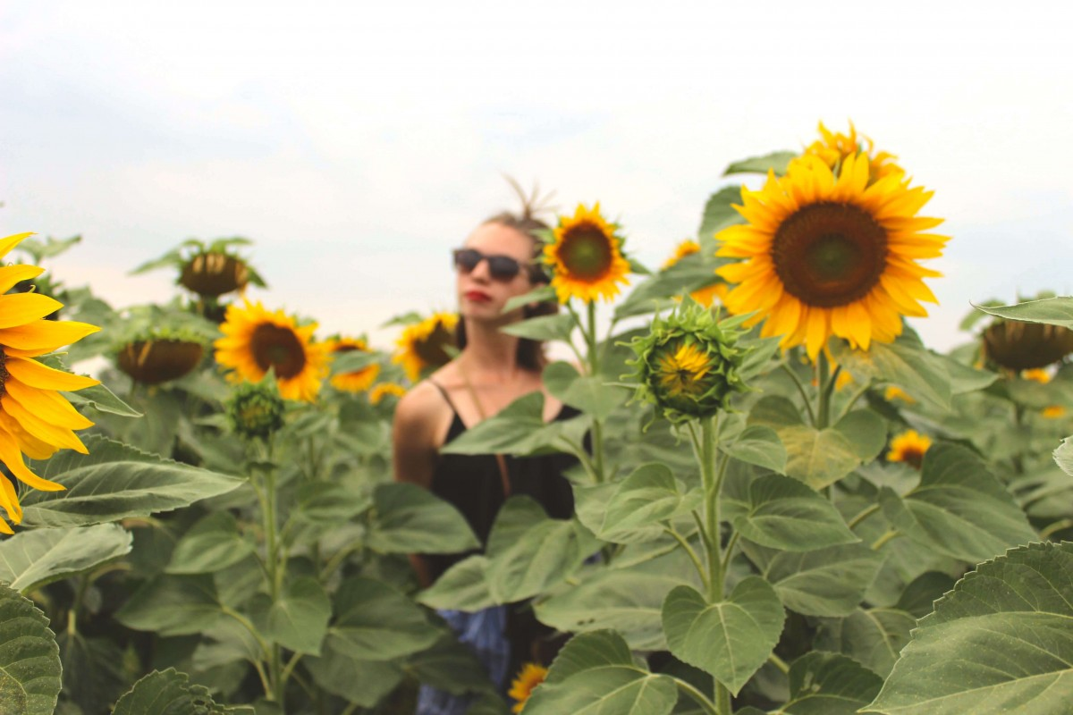 Suitcase Six Sunflower Why You Should Consider Workaway
