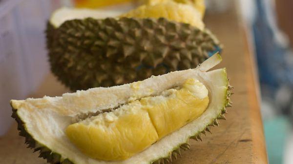 cara mengusir tikus menggunakan kulit durian