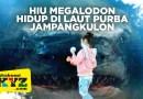 Hiu Megalodon hidup di laut purba Jampang Kulon, 5 fakta ini gen Sukabumi XYZ tahu?