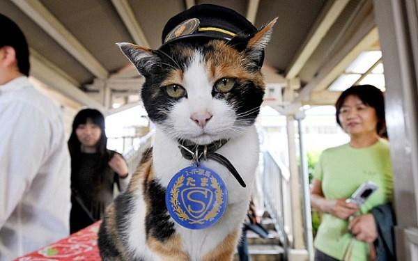 Jepang Mengembangkan 'Google Street' Versi Pandangan Kucing