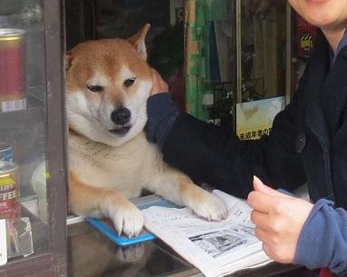 Wow Ada Anjing Jualan Rokok Di Tokyo, Jepang!!
