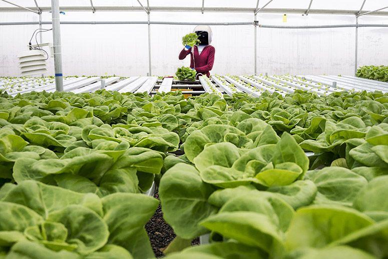 2017, Jepang Buka Lahan Pertanian Yang Dikelola Oleh Robot