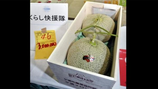 Harga Melon Yubari Jepang Rp 195 Juta Per Buah