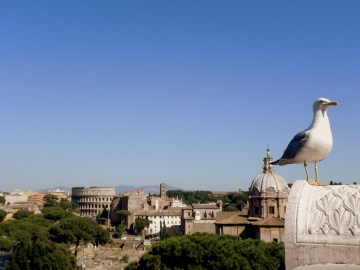 From the Rear Terrace of the Victor Emmanuel Monument in Rome