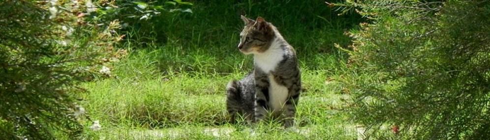 Stunning Kitty