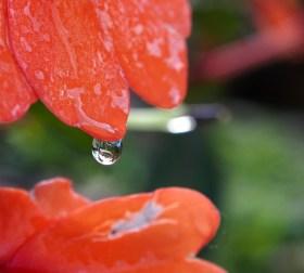 Glistening Raindrop