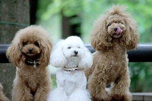 犬嫌いの友人がペット共生型マンションを購入してるのが意味わからない