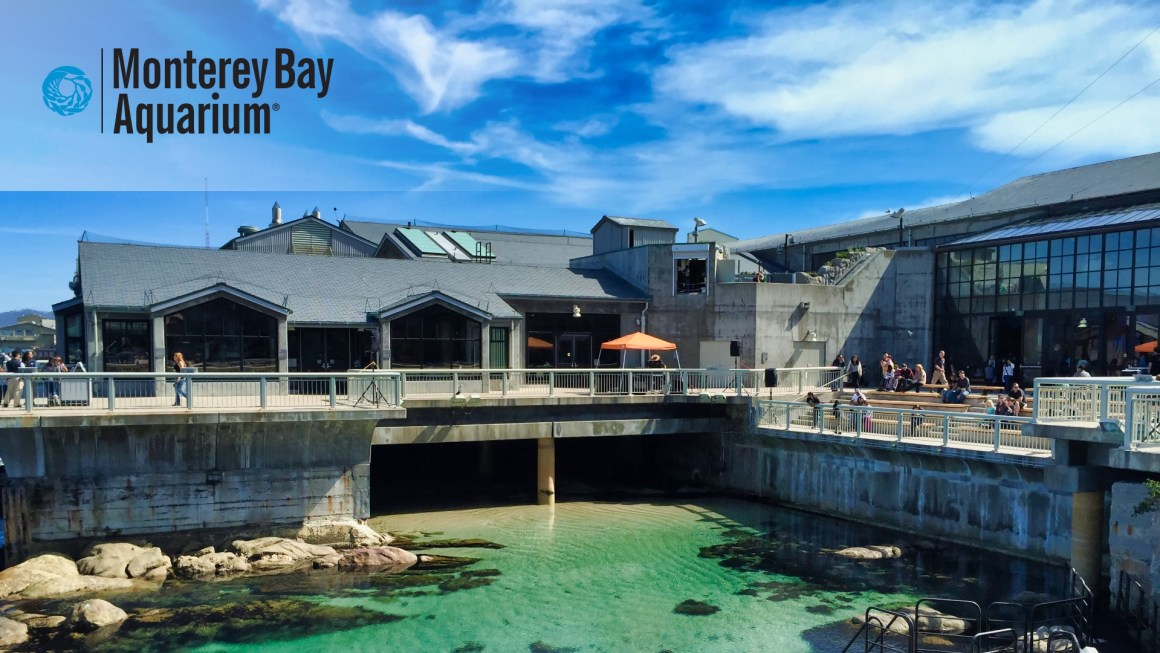 🇺🇸 USA, California – Monterey Bay Aquarium