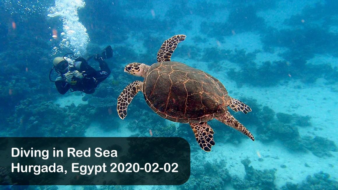 🇪🇬 Египет: 🤿 Дайвинг в Красном море (Февраль 2021)