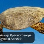 🇪🇬 Египет: 🤿 Подводный мир Красного моря (Апрель 2021)