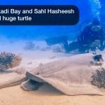 🇪🇬 Египет: 🤿 Дайвинг в Красном море - Макади Бэй, Сахл Хашиш (2021-05-02)