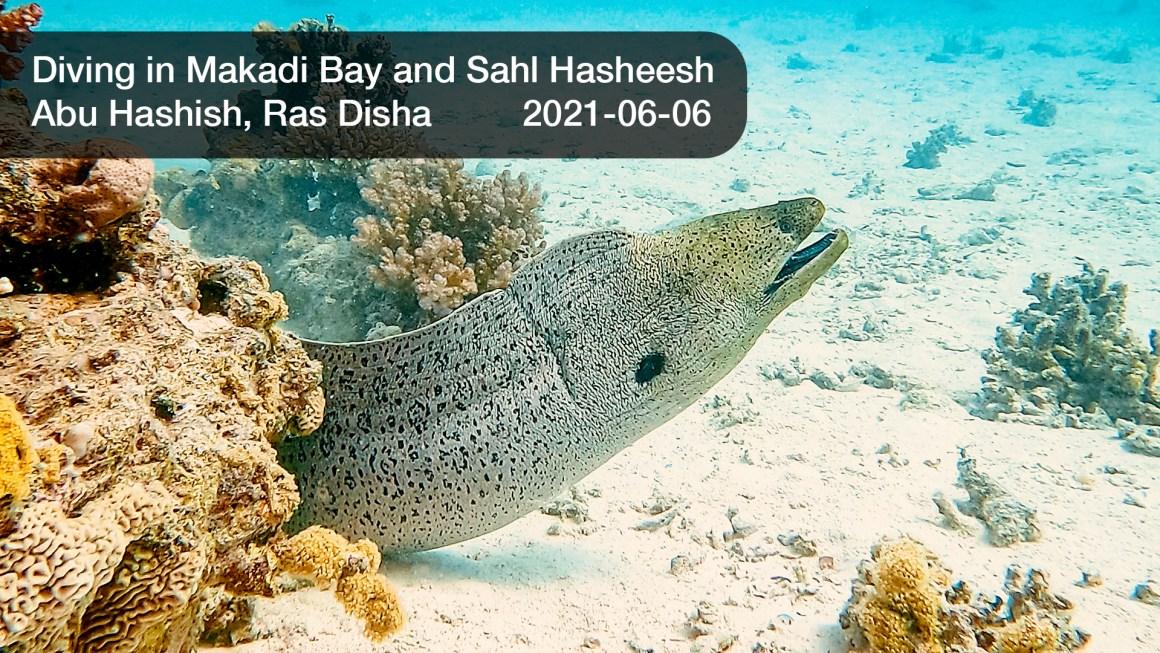 🇪🇬 Египет: 🤿 Дайвинг в Красном море – Абу Хашиш, Рас Диша (2021-06-06)