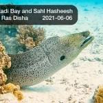 🇪🇬 Egypt: 🤿 Diving in Red Sea - Abu Hashish, Ras Disha (2021-06-06)