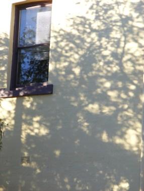 morning shadow II