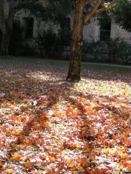 leaf and shadow II