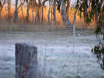 Golden (frosty) morning