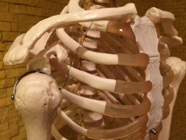 あばら骨(肋骨)が出てる原因はただの痩せすぎ?治す方法は?