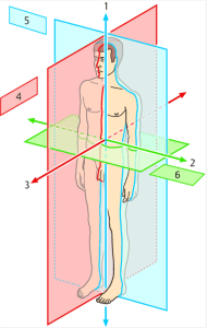 Die Ebenen des Körpers