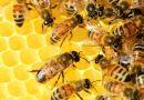 Laboriosi come le api di Notre Dame