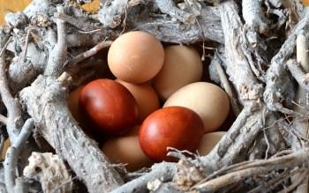 egg-495256_960_720