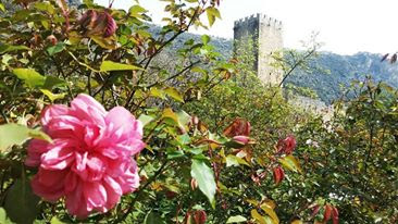 Ninfa, il giardino più bello del mondo