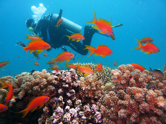 Sub fondale mar rosso