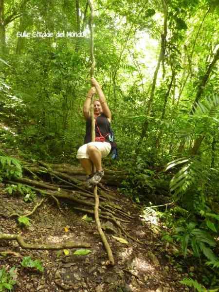 Palenque foresta