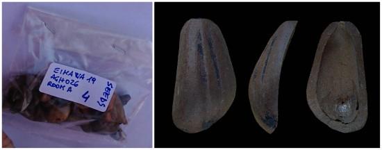 Pinoli trovati nello scavo archeologico in egitto