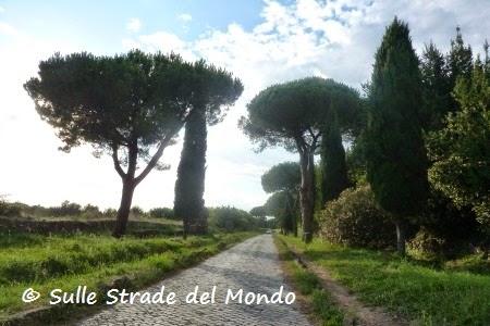 Pini lungo la Via Appia Antica