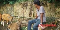Kisah Aco, Juru Parkir di Kendari Menabung 2 Tahun Untuk Beli Sapi Kurban