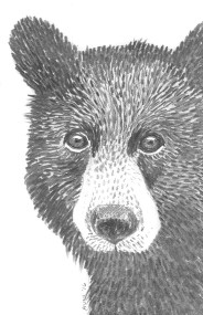 "Bear: (sold) 2016 5"" x 7"" graphite"