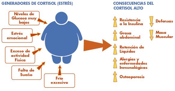 Relaciones entre el estrés, el peso y el cortisol