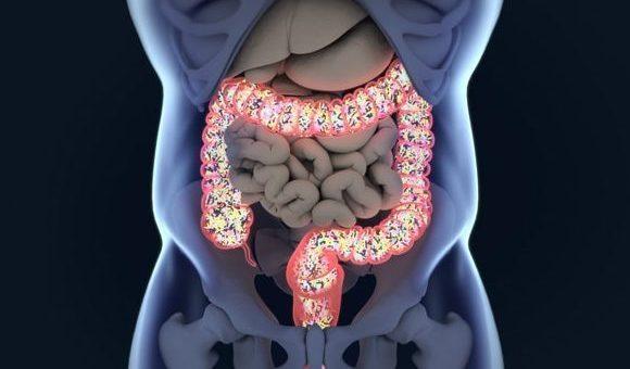 La flora intestinal y el desarrollo de la esclerosis múltiple